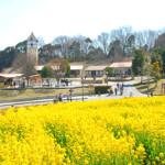 大阪ハーベストの丘でカレー作り有りのバスツアー形式の婚活パーティー(街コン)に参加したときの口コミ感想とレポート!